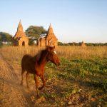 Hevonen Myanmarissa